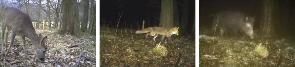 Fotofallenbilder im Projektgebiet ohne Nachweis der Spezies Wildkatze (Felis silvestris silvestris)