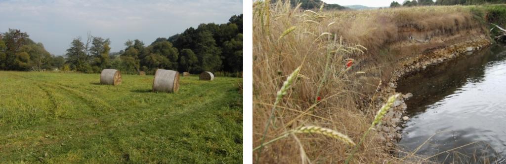 Ulsterwiesen werden in der Regel zur Silagegewinnung genutzt (links), Ackernutzung erfolgt häufig bis zur Gewässerkante (rechtes Bild: Ulster bei Buttlar)