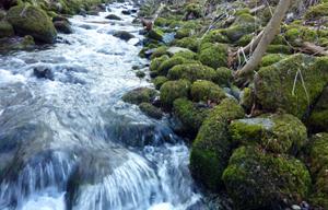 Elstal in den Mühlwiesen bei Oberelsbach